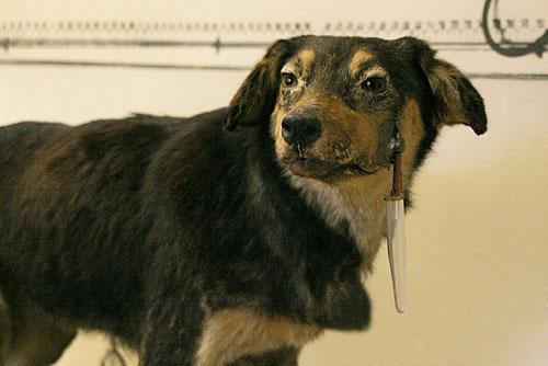 Pavlovs Dog Experiment