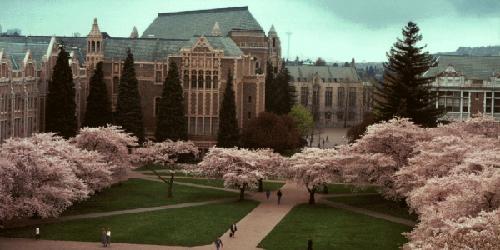 University of Washington Seattle Online Masters Degrees in Behavioral Psychology
