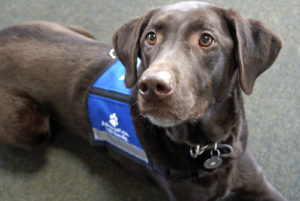 Therapy Dogs Help People Cope with Anxiety
